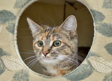 Adorable cat - house cat Royalty Free Stock Image