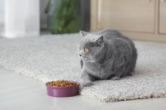 Adorable cat near bowl with food at home royalty free stock image