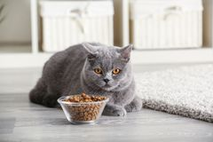 Adorable cat near bowl with food at home stock image
