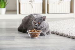 Adorable cat near bowl with food at home stock photo