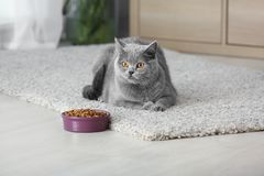 Adorable cat near bowl with food at home royalty free stock photo