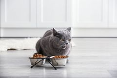 Adorable cat near bowls with food at home stock photography