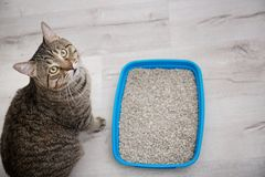 Adorable cat near litter tray indoors. Pet care stock image