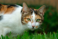 Adorable cat portrait Stock Images