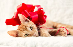 Adorable cat with red bow Royalty Free Stock Photo