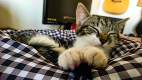 Cat sleeping with her cute paws up front. stock image