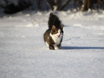 Adorable cat on a snow Stock Photography