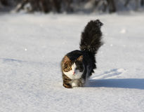Adorable cat on a snow Royalty Free Stock Image