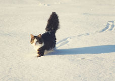 Adorable cat on a snow Royalty Free Stock Photo