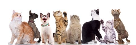 Adorable cats looking up and to side on white background royalty free stock photo
