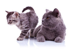 Adorable cats on white background Royalty Free Stock Photos