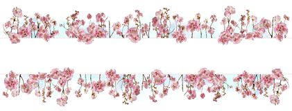 Adorable cherry blossom background with little branches and leaves Royalty Free Stock Image