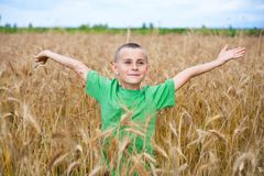 Adorable child in a wheat field royalty free stock images