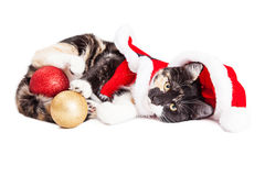 Adorable Christmas Calico Santa Kitty Royalty Free Stock Photography