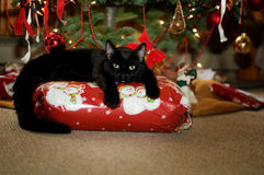 Adorable christmas cat royalty free stock image
