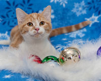 Adorable Christmas orange tabby kitten laying with jingle bells on blue snowflake blanket. Christmas Holiday scene of orange and white kitten playing with Royalty Free Stock Images