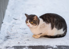 Adorable city cat sitting on a snow in cold weather Royalty Free Stock Photos