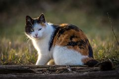 Adorable colorful cat sitting on log and looking at you royalty free stock image
