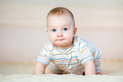 Adorable crawling baby boy indoors Royalty Free Stock Images
