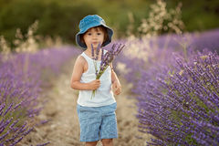 Adorable cute boy with a hat in a lavender field Royalty Free Stock Image
