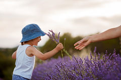 Adorable cute boy with a hat in a lavender field Stock Photos