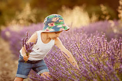Adorable cute boy with a hat in a lavender field Stock Images