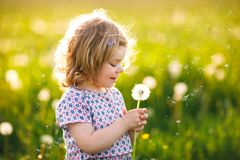 Adorable cute little baby girl blowing on a dandelion flower on the nature in the summer. Happy healthy beautiful stock photos
