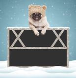 Adorable cute pug puppy dog with knitted hat, hanging with paws on blank blackboard sign with wooden frame on blue background with Royalty Free Stock Photos
