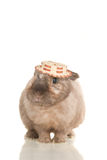 Adorable cute rabbit sit on white in fun hat Stock Images