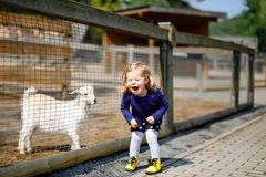 Adorable cute toddler girl feeding little goats and sheeps on a kids farm. Beautiful baby child petting animals in the royalty free stock images