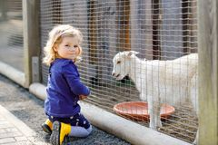 Adorable cute toddler girl feeding little goats and sheeps on a kids farm. Beautiful baby child petting animals in the stock images