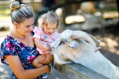 Adorable cute toddler girl and young mother feeding little goats and sheeps on a kids farm. Beautiful baby child petting stock photography