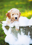 Adorable Cute Young Puppy Stock Images