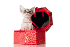 Adorable devon rex kitten in a red box Stock Image