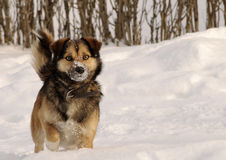 Adorable dog Royalty Free Stock Photo