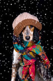 Adorable dog with hat in the snow. This dog is ready to face the cold snow Stock Photography