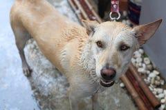 Adorable dog showering Royalty Free Stock Photos