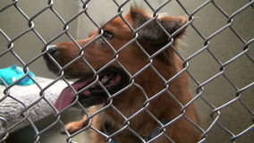 Adorable dog sitting in cage at animal shelter stock video