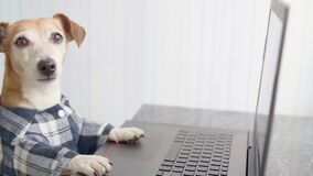 Adorable dog working with computer wearing glasses