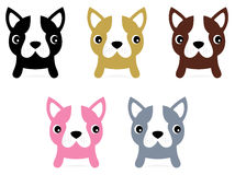 Little french buldog puppies set Royalty Free Stock Image