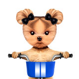 Adorable doggy sitting on a bicycle with basket Stock Photo