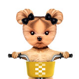 Adorable doggy sitting on a bicycle with basket Royalty Free Stock Photo