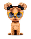 Adorable doggy with sunglasses, isolated on white. Funny adorable girl of yorkshire terrier with sunglasses, isolated on white. 3D illustration with clipping Royalty Free Stock Photos