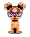 Adorable doggy with sunglasses, isolated on white. Funny adorable girl of yorkshire terrier with sunglasses, isolated on white. 3D illustration with clipping Stock Photography