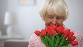 Adorable elderly female sniffing bunch of tulips and smiling at camera, present stock footage