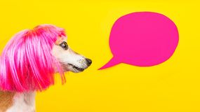 Adorable fashionable dog in pink wig on yellow background with pink speech balloon. fashionable hairstyle, hairdresser`s
