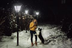 Adorable fluffy cute black and white border colly being trained and petting girl in a park. lights and bushes on the stock photo