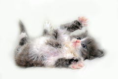 Adorable  fluffy kitten Stock Image