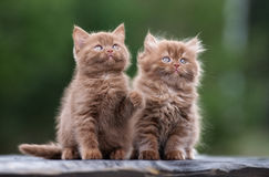 Adorable fluffy kittens outdoors Stock Photos