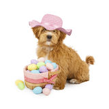 Adorable Fluffy Puppy Sitting Royalty Free Stock Images